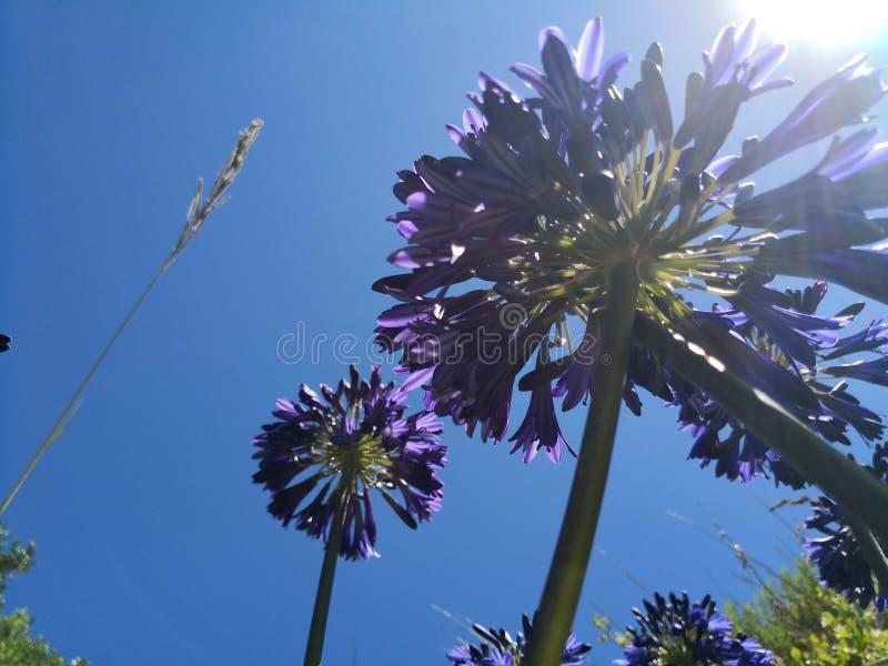 Flor púrpura inferior imágenes de archivo libres de regalías