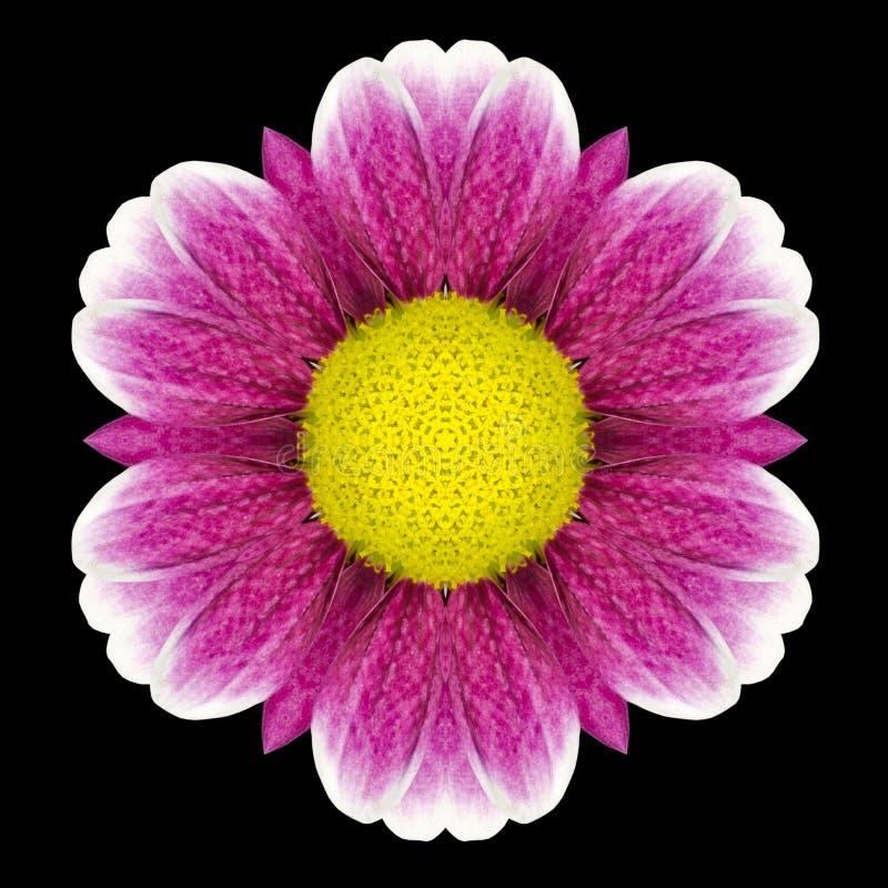 Flor púrpura Mandala Kaleidoscope Isolated en negro fotos de archivo libres de regalías