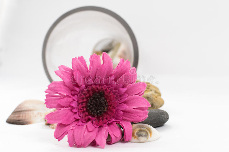 Flor púrpura que miente en el fondo blanco imagen de archivo libre de regalías