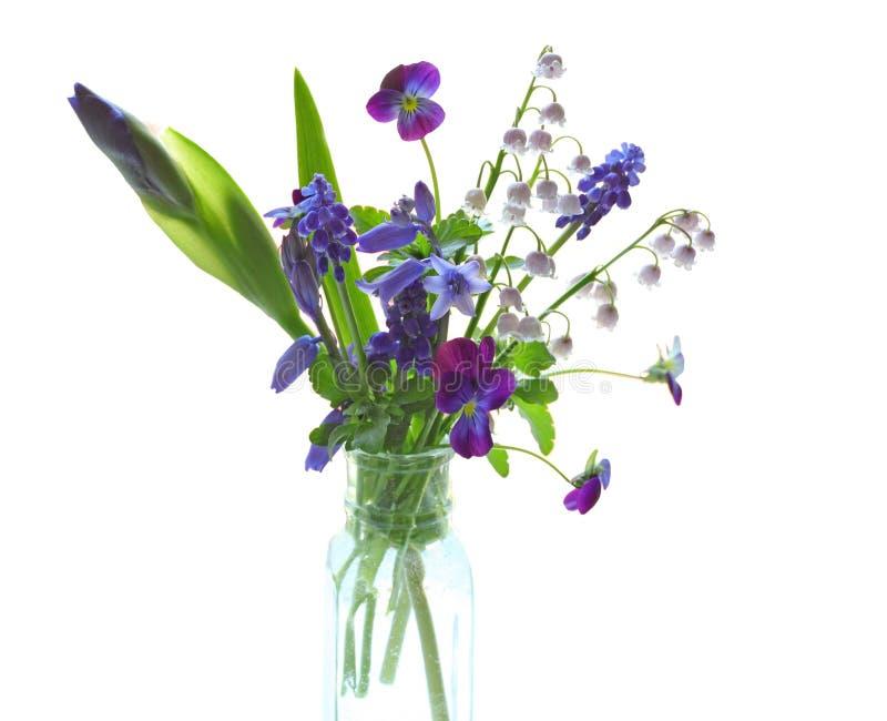 Flor púrpura retroiluminada imagen de archivo libre de regalías