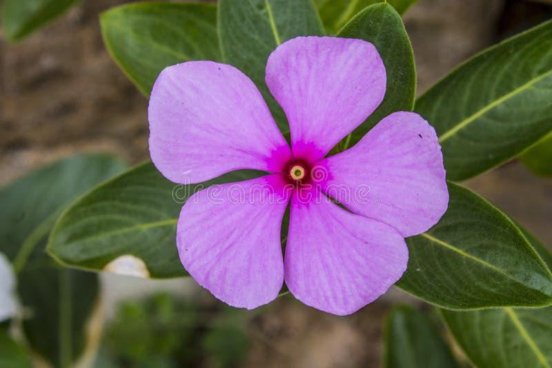 Flor p?rpura en el jard?n fotografía de archivo