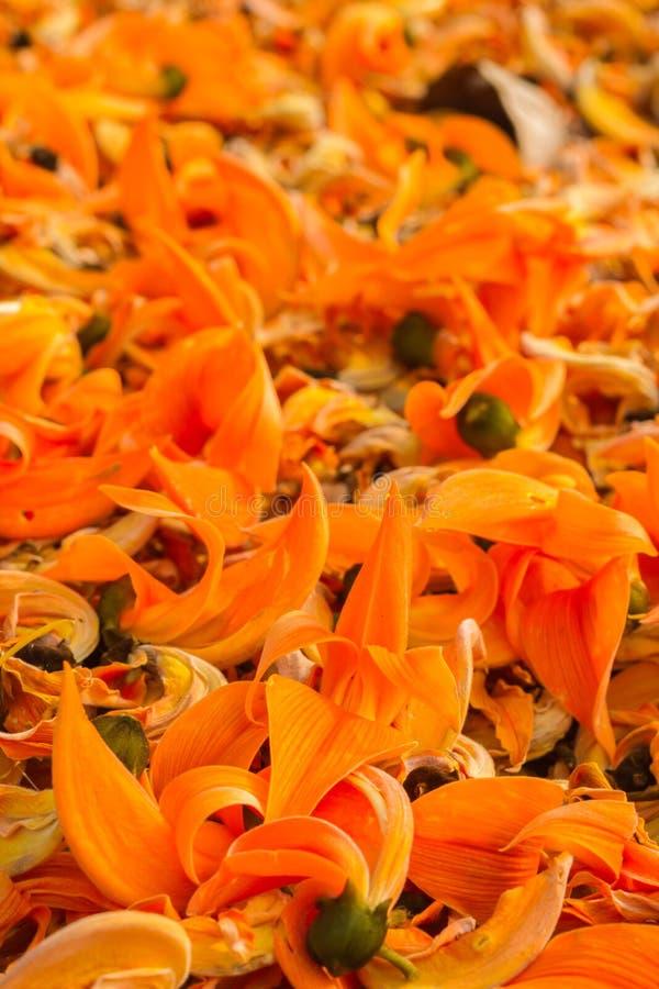 Flor Palas que baja en la tierra fotografía de archivo libre de regalías