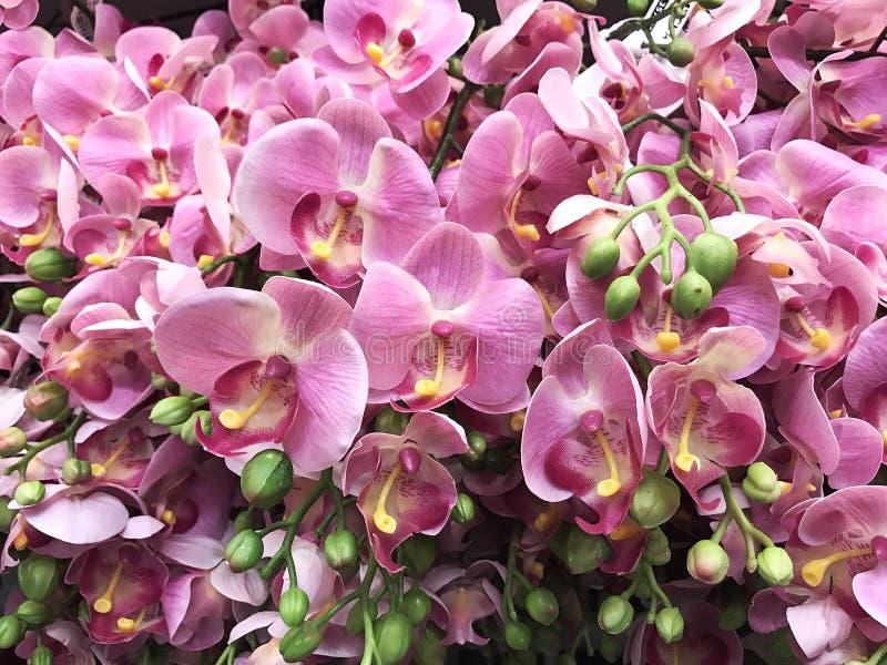 Flor para la muchacha el día de San Valentín imagen de archivo libre de regalías