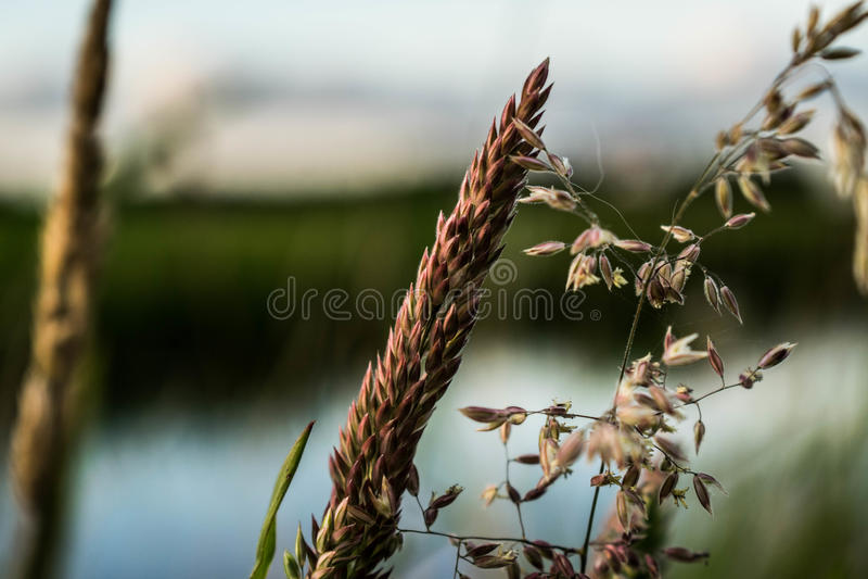 Flor para o sol foto de stock