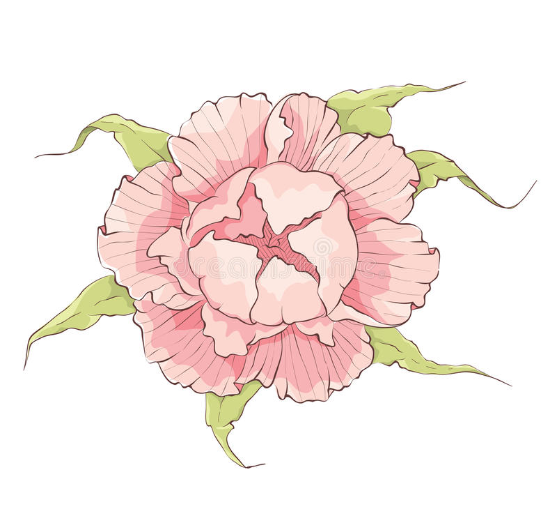 Flor -- Peônia cor-de-rosa ilustração do vetor
