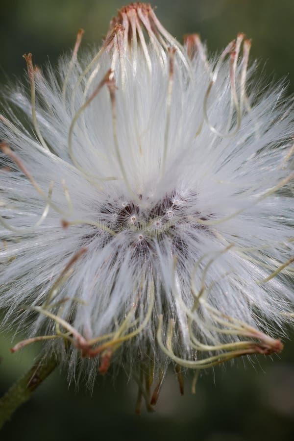 Flor pequena branca com detalhes fotos de stock