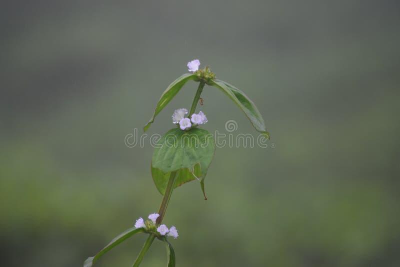 Flor pequena da grama da flor da folha imagens de stock