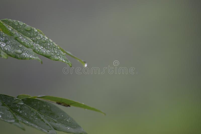 Flor pequena da grama da flor da folha imagem de stock royalty free