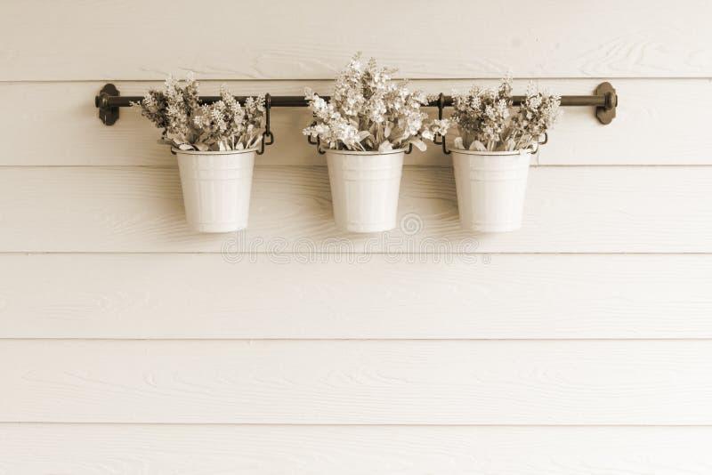Flor pequena do potenciômetro a bordo da parede de madeira imagem de stock