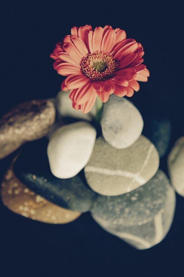 Flor Petaled rosada en fotografía macra imagen de archivo libre de regalías