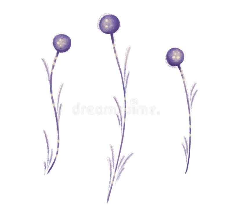 Flor Planta del campo stock de ilustración