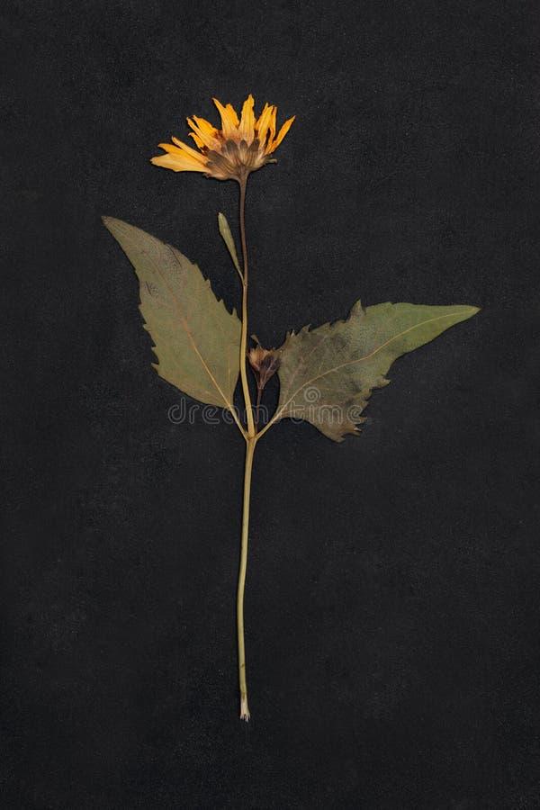 Flor presionada y secada de la primavera del verano imagenes de archivo