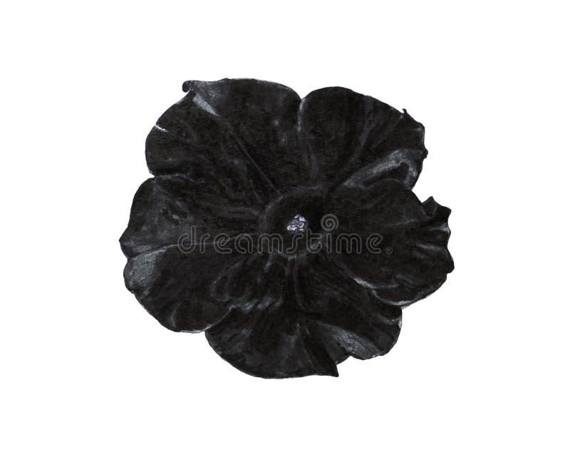 Flor preta do petúnia ilustração royalty free