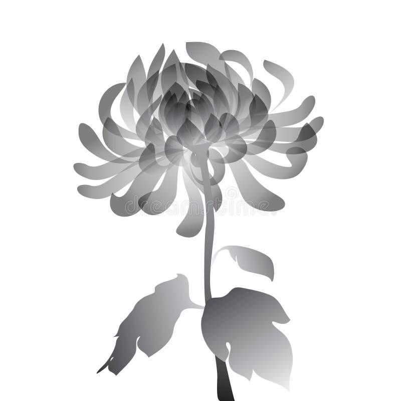 Flor preta no fundo branco fotografia de stock royalty free