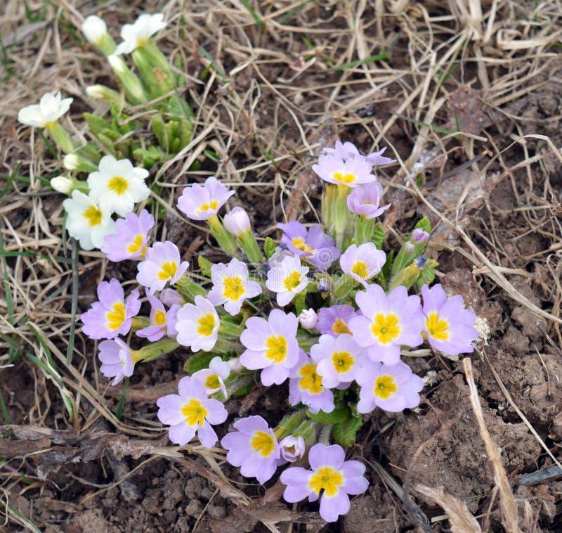 Flor, primavera, naturaleza, blanco, amarillo, flores, planta, verde, flor, jard?n, floraci?n, flora, verano, hermoso, campo, flo fotografía de archivo