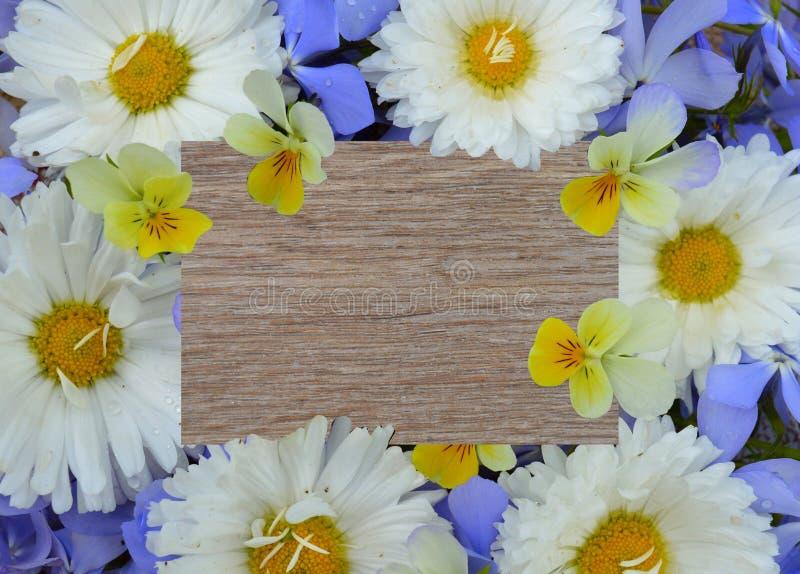 Flor, quadro, margarida, natureza, branco, mola, floral, flores, beira, amarelo, planta, verão, cor-de-rosa, isolado, flor, flor imagem de stock