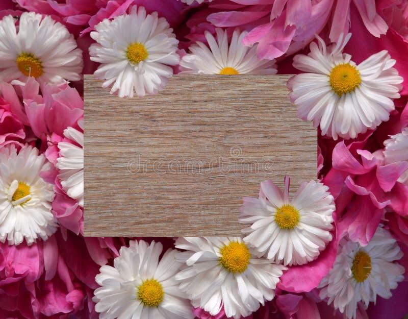 Flor, quadro, margarida, natureza, branco, mola, floral, flores, beira, amarelo, planta, verão, cor-de-rosa, isolado, flor, flor fotos de stock royalty free