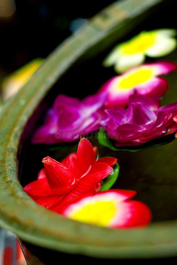 Flor que flota en el agua fotografía de archivo libre de regalías