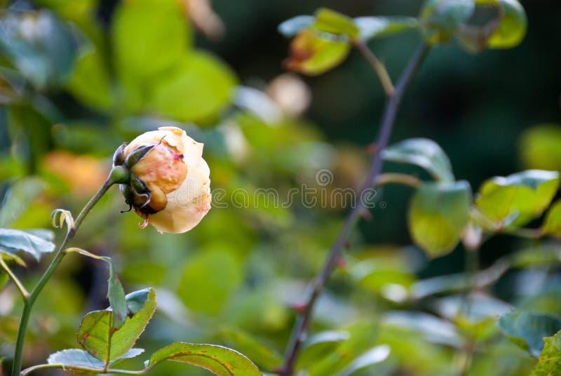 Flor que inclina-se no vento imagens de stock