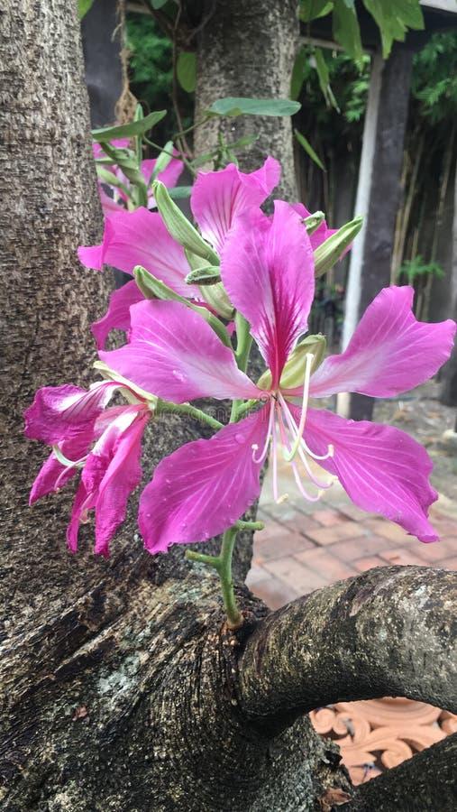 Flor róseo foto de stock royalty free