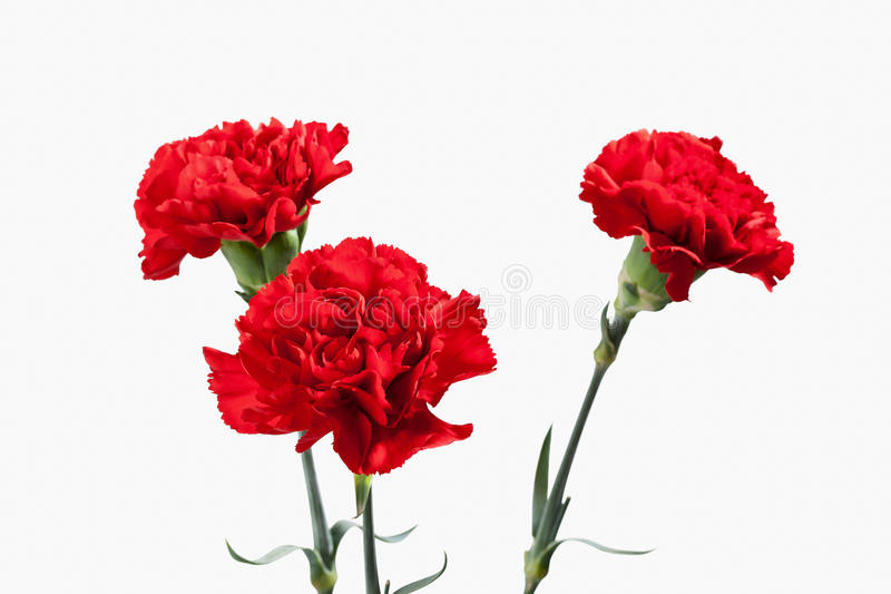 Flor Ramalhete vermelho dos cravos imagem de stock