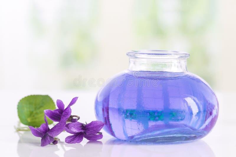 Flor recolhida Viola Odorata da viola Matérias primas para óleos essenciais, imagem de stock