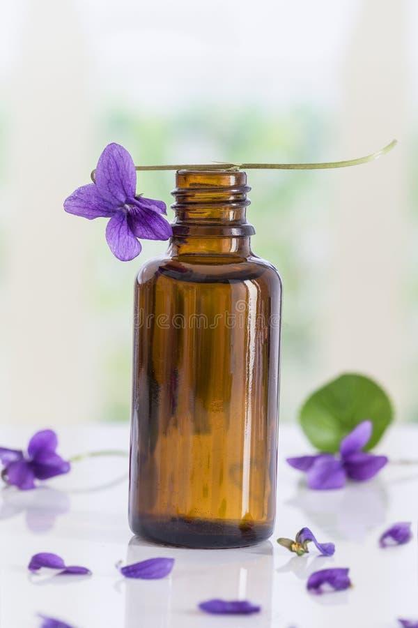 Flor recolhida Viola Odorata da viola Matérias primas para óleos essenciais, imagem de stock royalty free