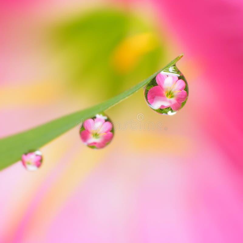 flor reflejada en gotitas foto de archivo libre de regalías