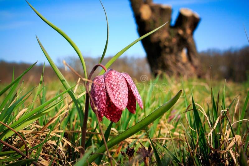 Flor Repeticionada Sob Céu Azul imagem de stock