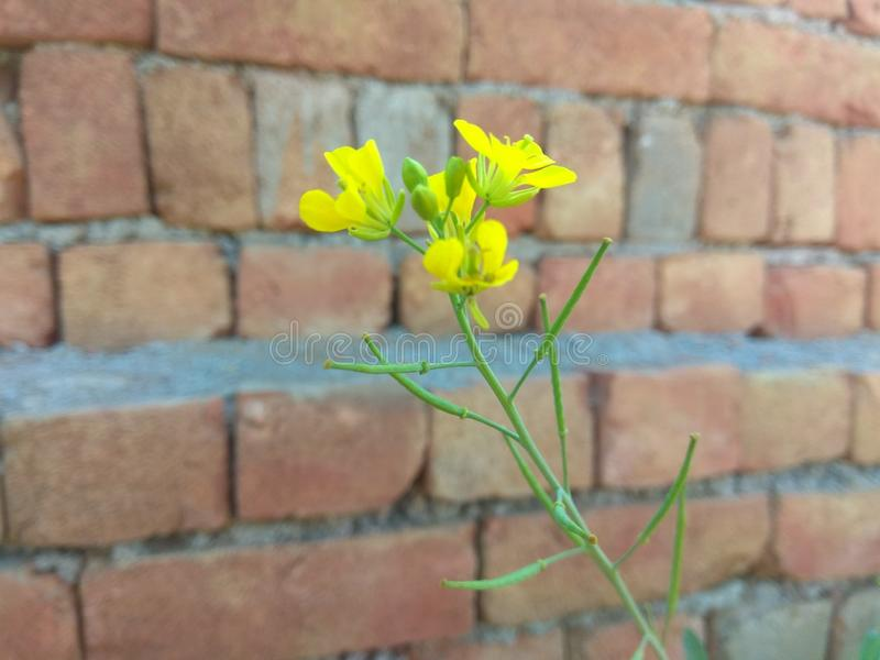 flor reunida foto de archivo