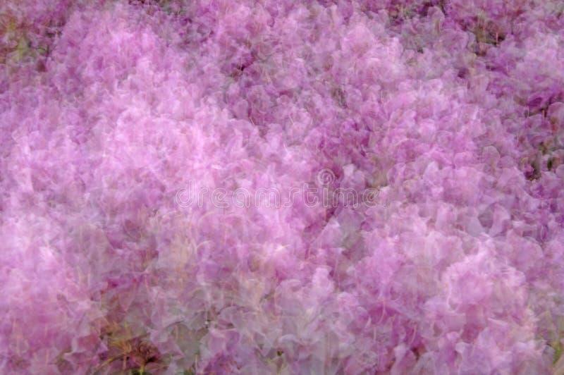 Flor-Rhododendron foto de stock royalty free