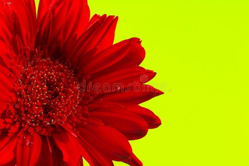 Flor roja fotos de archivo