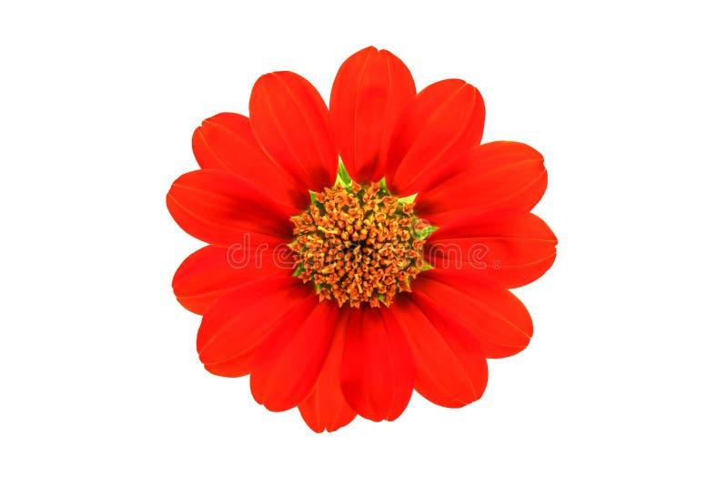 Flor roja imagen de archivo