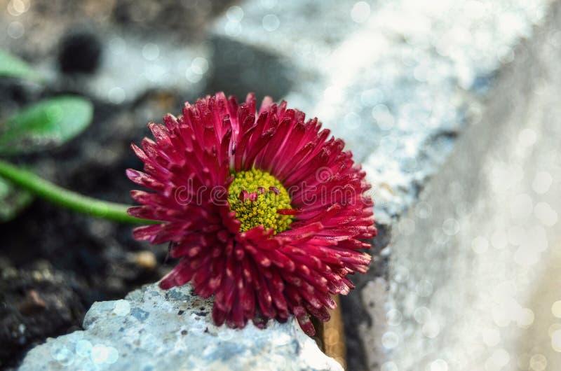 Flor roja fotografía de archivo libre de regalías