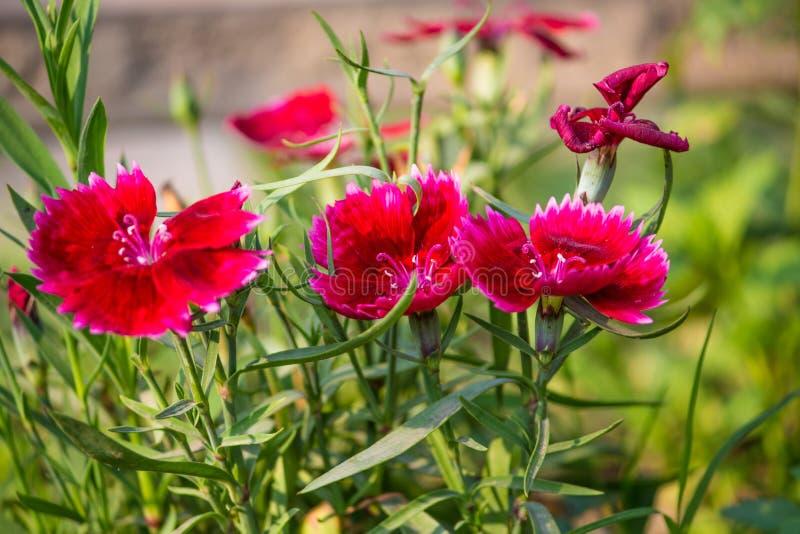 Flor roja foto de archivo