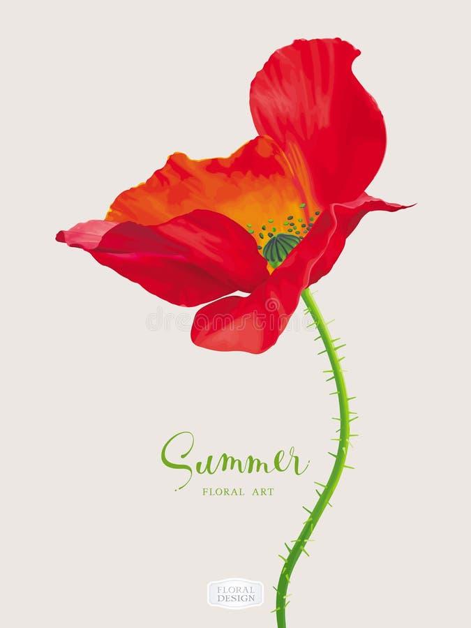 Flor roja brillante lujosa de la amapola del vector ilustración del vector
