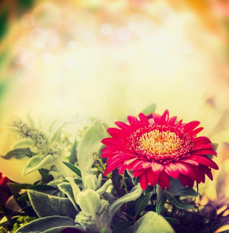 Flor roja del gerbera en fondo borroso de la naturaleza imagen de archivo libre de regalías