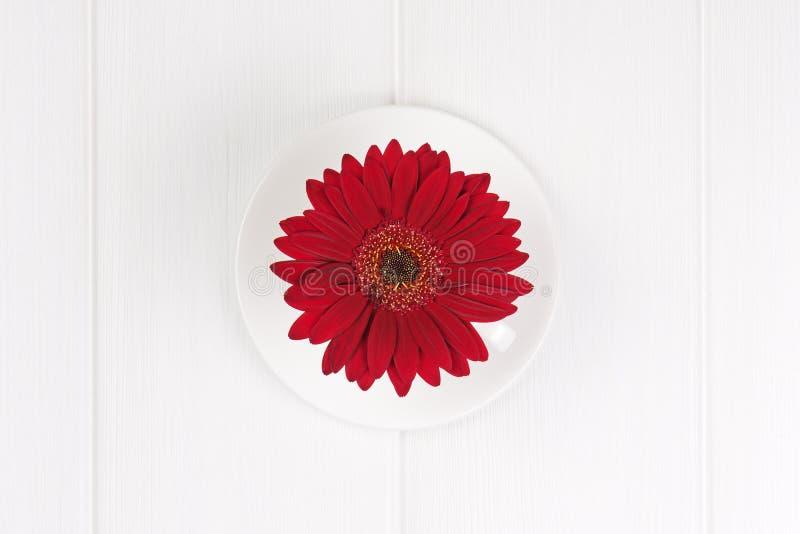 Flor roja del gerbera en taza y salsa en el fondo de madera blanco foto de archivo libre de regalías