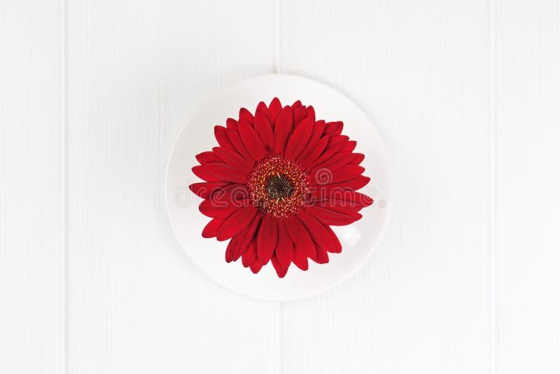 Flor roja del gerbera en taza y salsa en el fondo de madera blanco imagen de archivo libre de regalías