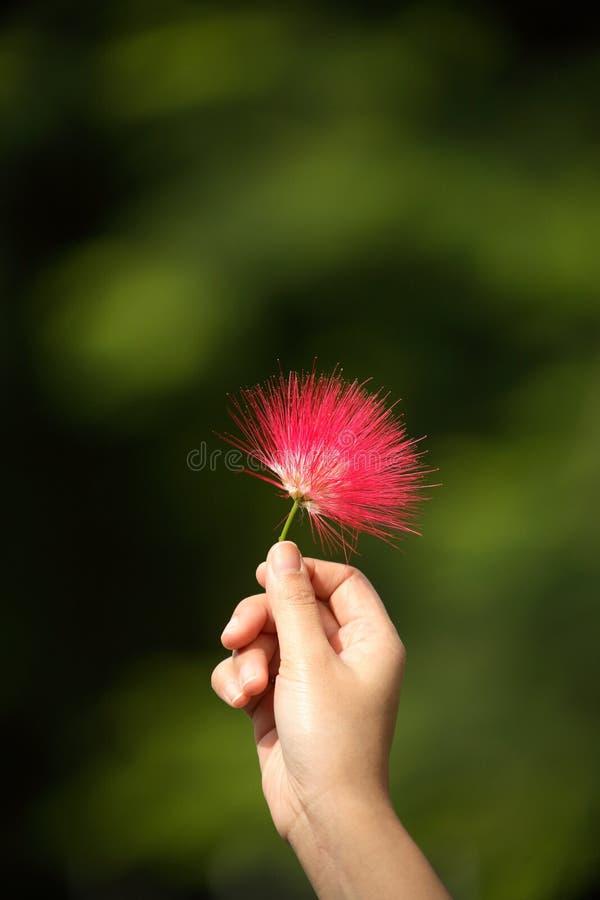 Flor roja dulce fotos de archivo