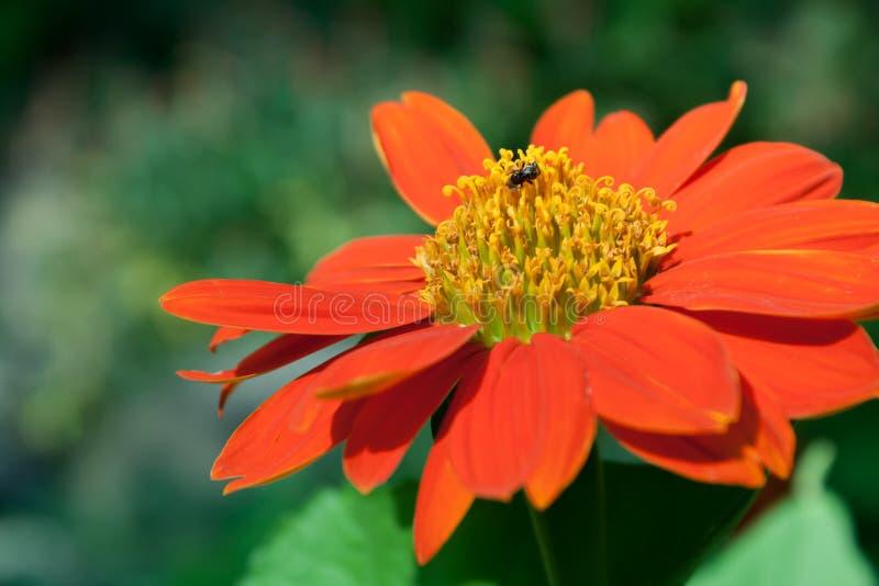 Flor roja en el jardín foto de archivo libre de regalías