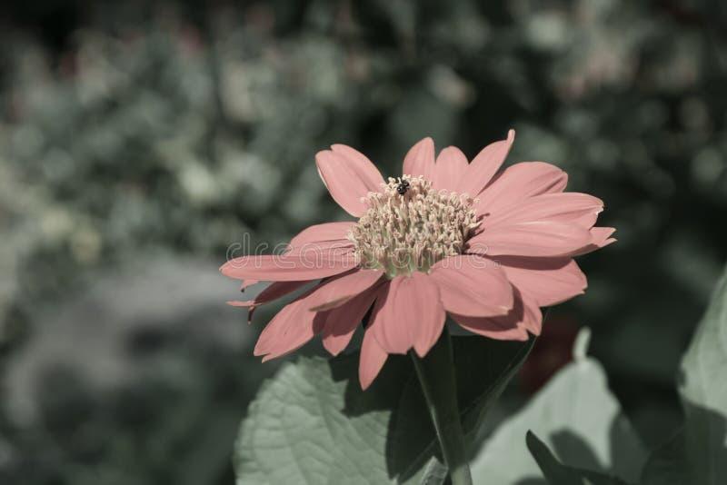 Flor roja en el jardín fotografía de archivo libre de regalías