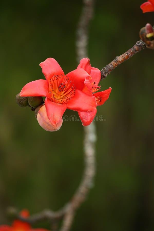 Flor roja en el otoño fotos de archivo