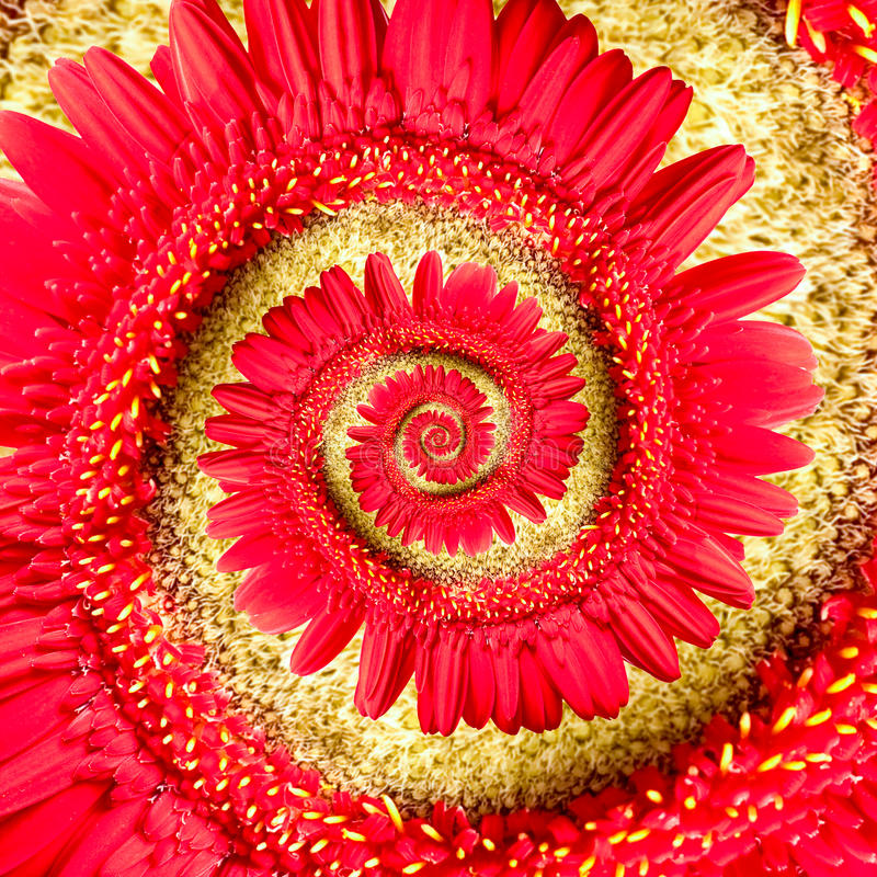 Flor roja espiral del gerbera imagen de archivo