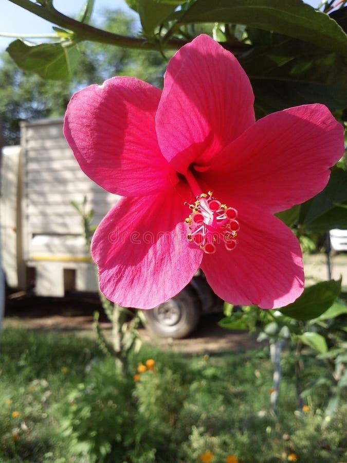 Flor roja hermosa en parque foto de archivo