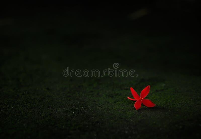 Flor roja que cae en la oscuridad foto de archivo