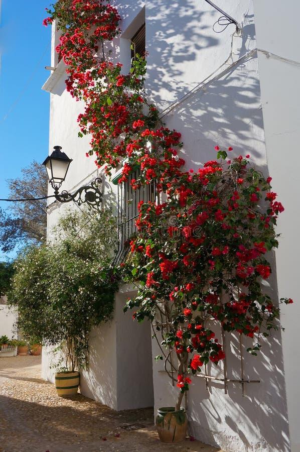Flor roja que se inclina en la pared blanca fotos de archivo libres de regalías