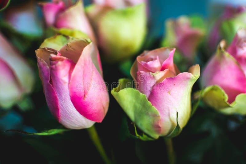 A flor romântica aumentou Sinal no amor Flor do verão foto de stock