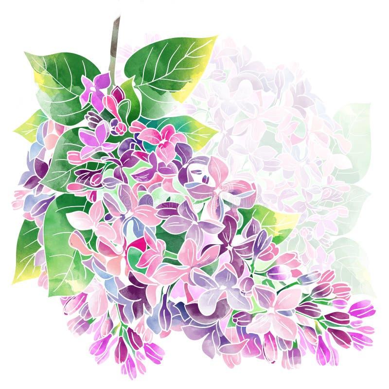 Lilac ilustração do vetor
