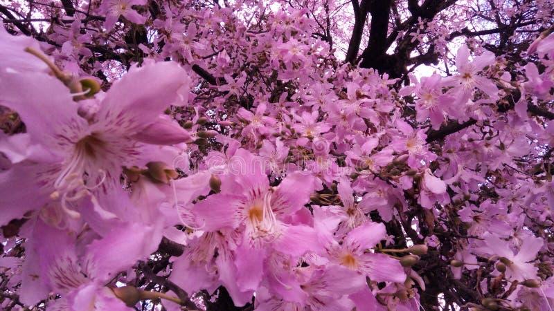Flor rosa stock afbeeldingen